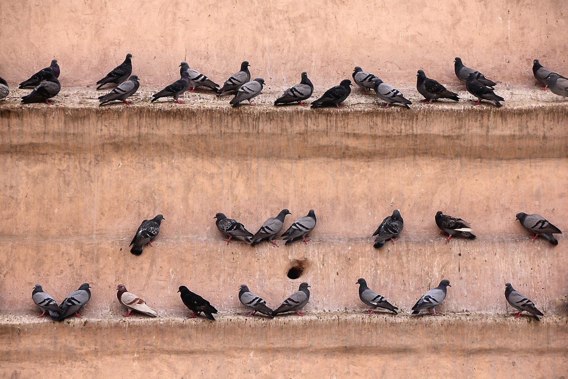 pigeons-2408728-1920-1_34